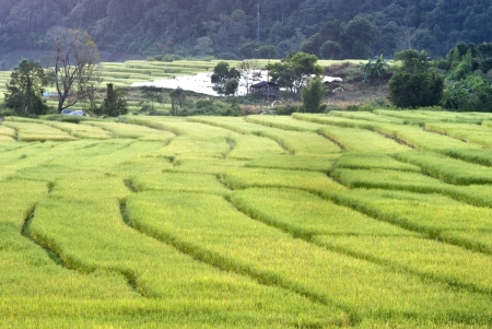 Terrace of rice field in Mae Klang Luang Village in Thailand Stock Photo - 16175285