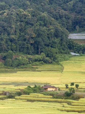 Terrace of rice field in Mae Klang Luang Village in Thailand Stock Photo - 16175231
