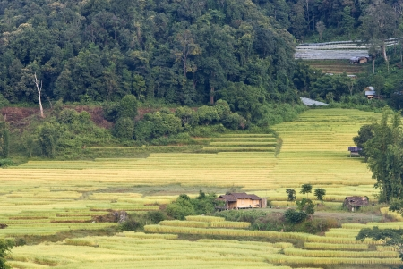 Terrace of rice field in Mae Klang Luang Village in Thailand Stock Photo - 16175305
