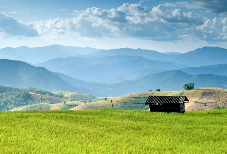 Beautiful rice field in Bong Peang Village, Thailand Stock Photo - 16493924