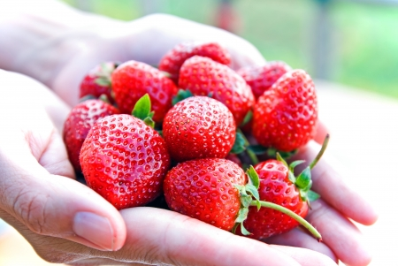 Close-up of fresh strawberry harvest from organic farm photo