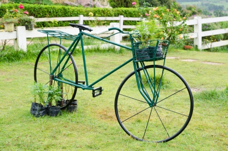 fench: Old green bicycle in glass meadow