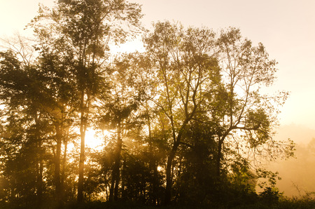 lightbeam: Beautiful sunlight  through a tree in forest Stock Photo