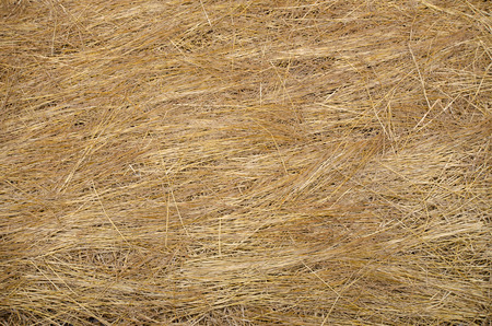 Texture of hay stack cover in onion agriculture field photo