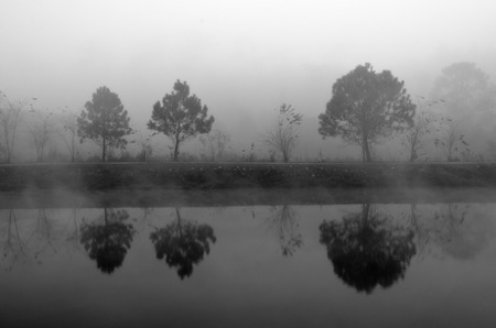 non urban: Reflection of tree in mistry Stock Photo