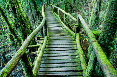 myrtle green: Wooden walkway in Cloud forest or mossy forest in Inthanon National park, Chiang Mai, Thailand