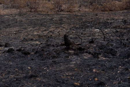 Forest after being burnt in thailand.