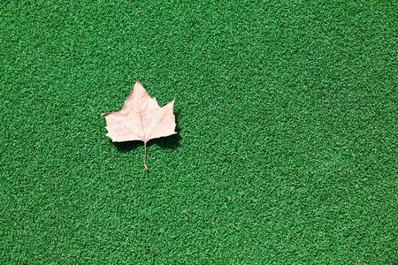 プラスチック緑ラフの葉を乾燥します。