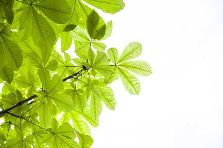 Background of green leaves with copyspace for text 写真素材