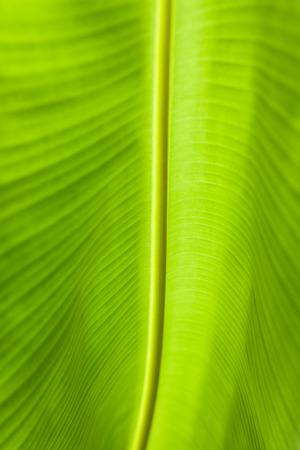 leaf close up: background image of  of banana leaf close up Stock Photo