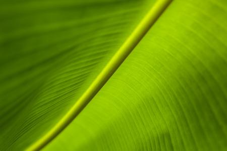 バナナの葉の背景画像をクローズ アップ