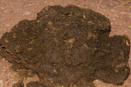 Cow dung at night Stock Photo