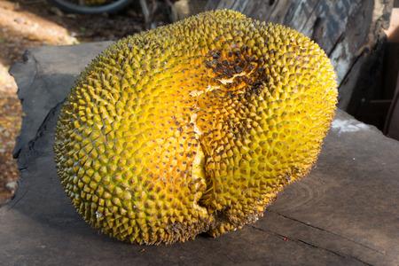 jack fruit: Big jack fruit