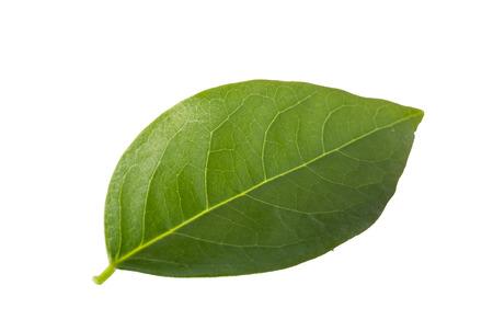 grosella: hojas de grosella