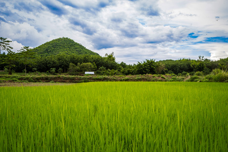 paddy: Paddy fields, mountains, sky soft and blur