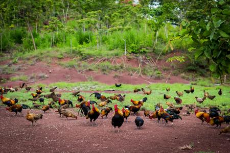 coop: chicken coop