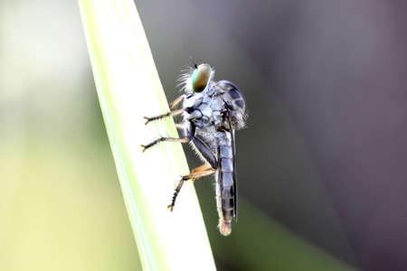 gadfly: Gadfly
