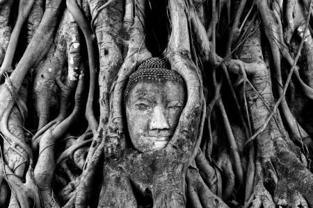 deep south: A Big head Buddha in root