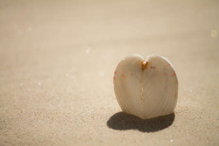 heart shaped shadow from shell photo