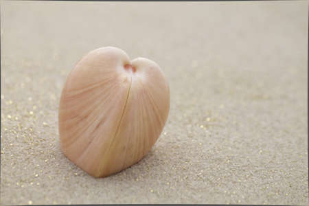 heart shaped shell photo