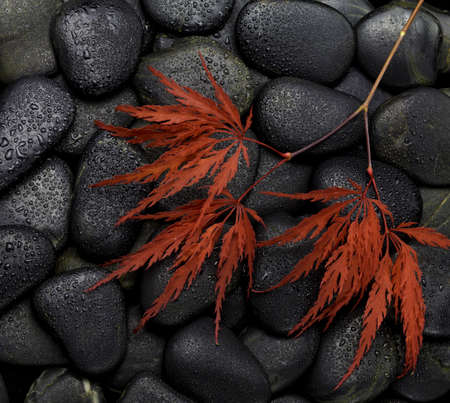 maple leaves on black stones photo