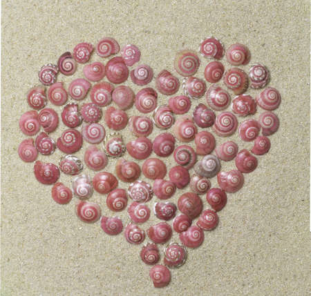 heart made of pink shells photo