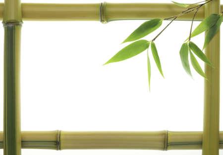 bambu: Amarillo hojas y tallos de bamb� como marco Foto de archivo