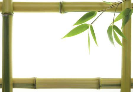 Yellow Bamboo leaves and stalks as frame photo