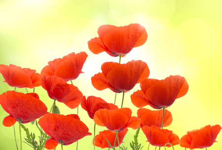 Group of red poppies flowers stock photo picture and royalty free group of red poppies flowers stock photo 29617380 mightylinksfo