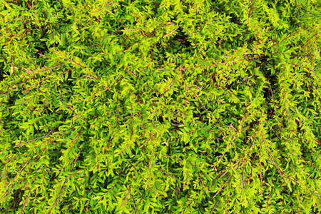 royalty free stock photos: Green wall