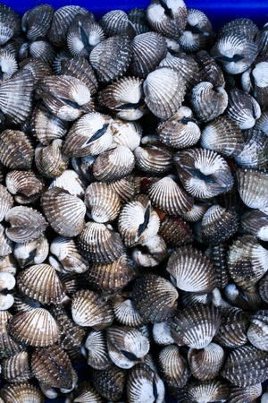 beachcombing: A background of fresh cockles for sale at a market