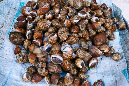 common market: A type of Thai seafood shells Stock Photo