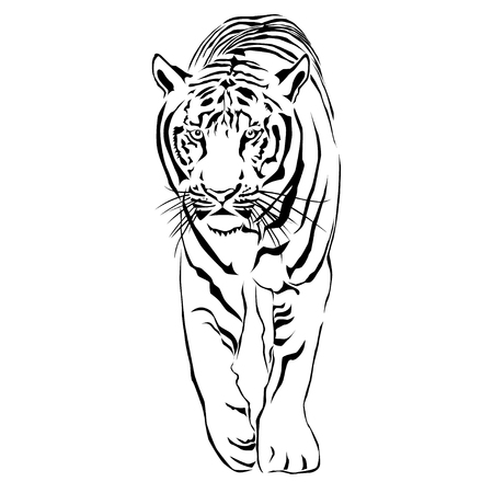 The Tigers are looking forward prey. Vector illustrator EPS 10
