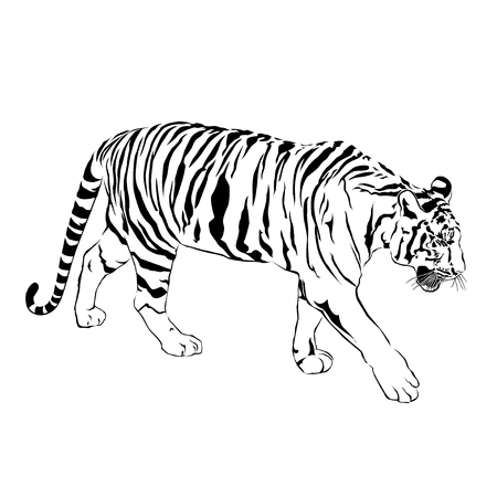 Tiger walking, black and white, vector EPS10
