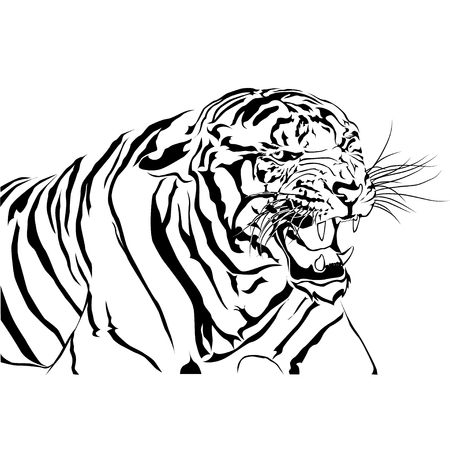 Tigers bared Isolated white background, vector EPS10
