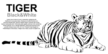 Tiger sitting, black and white Illustration