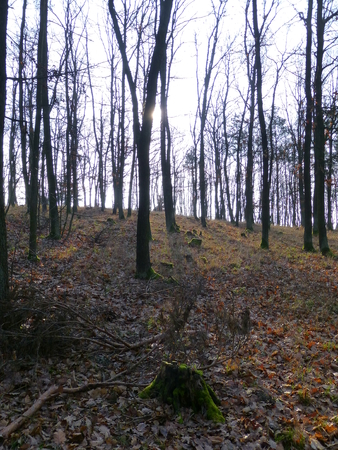 Photo of an autumn forest with leafless trees