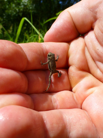 Photo of a tiny frog climbing on a human hand