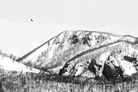 White-tailed eagle flying in front of winter mountains scenery in Hokkaido, Bird silhouette. Beautiful nature scenery in winter. Mountain covered by snow, forest. wallpaper, Japan, Asia, birding
