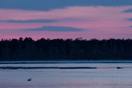 Whooper Swan or Cygnus cygnus swimming on Lake in Winter during magical colorful sunset,Hokkaido,Japan, fairytale, swan lake, wallpaper, birding adventure in Asia,beautiful elegant royal bird Reklamní fotografie - 126195050