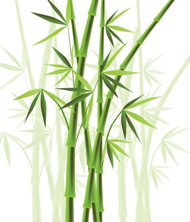 bamboo: Bamboo