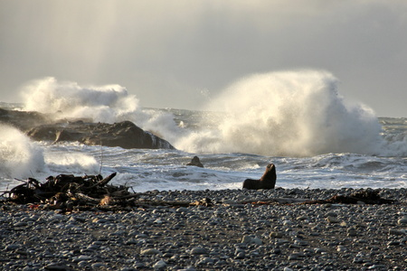 stormy sea: Adorable fur seal in front of stormy sea. Stock Photo