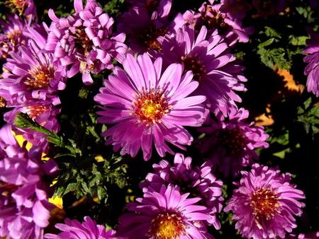 in bloom: Purple bloom