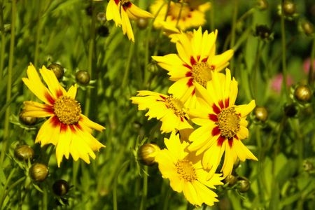 detailed image: Detailed image of yellow flowers Stock Photo