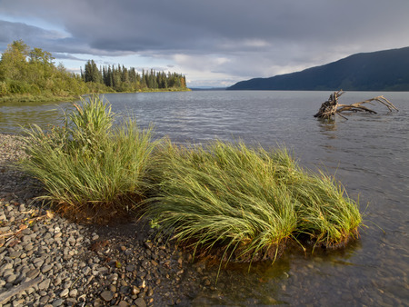 Shoreline view of Meziadin Lake with grass in the foreground and a waterlogged stump submerged underwater