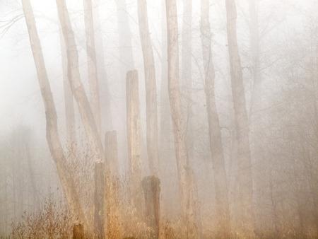 multiple exposure: La natura del paesaggio di alberi nudi con in camera esposizione multipla Archivio Fotografico