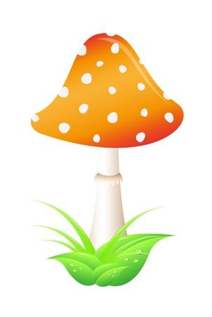 Mushroom – Amanita on white background Stock Vector - 10225625