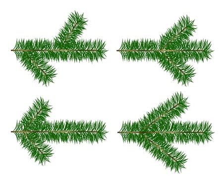 Set vector Christmas tree branch for decorate on white background Stock Vector - 10410693