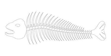 inedible: Fish bones skeleton