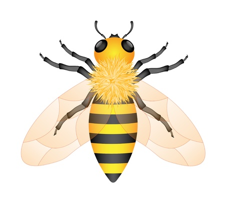 Honey bee Stock Vector - 12498272